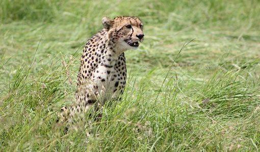 【野生の王国】ケニア、タンザニア、ザンジバル、東アフリカ縦断 その1